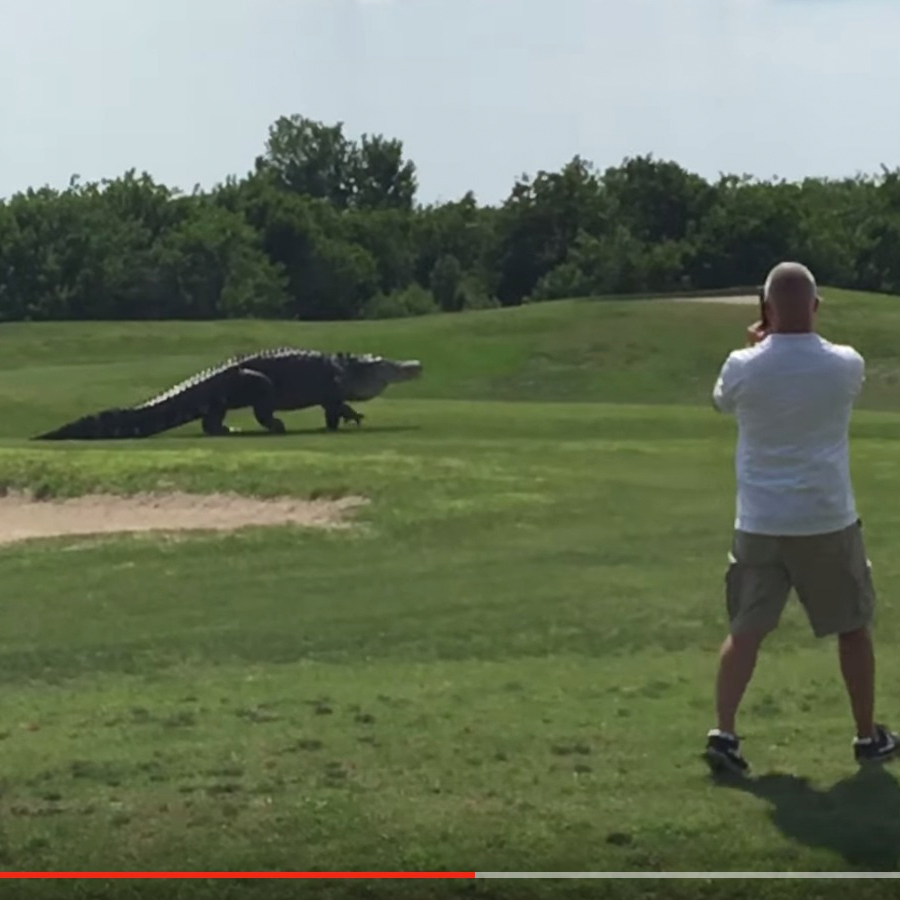 Jurassic Croc Shows Up At Golf Course
