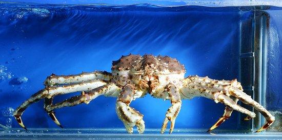 Alaskan King Crab as a Pet?