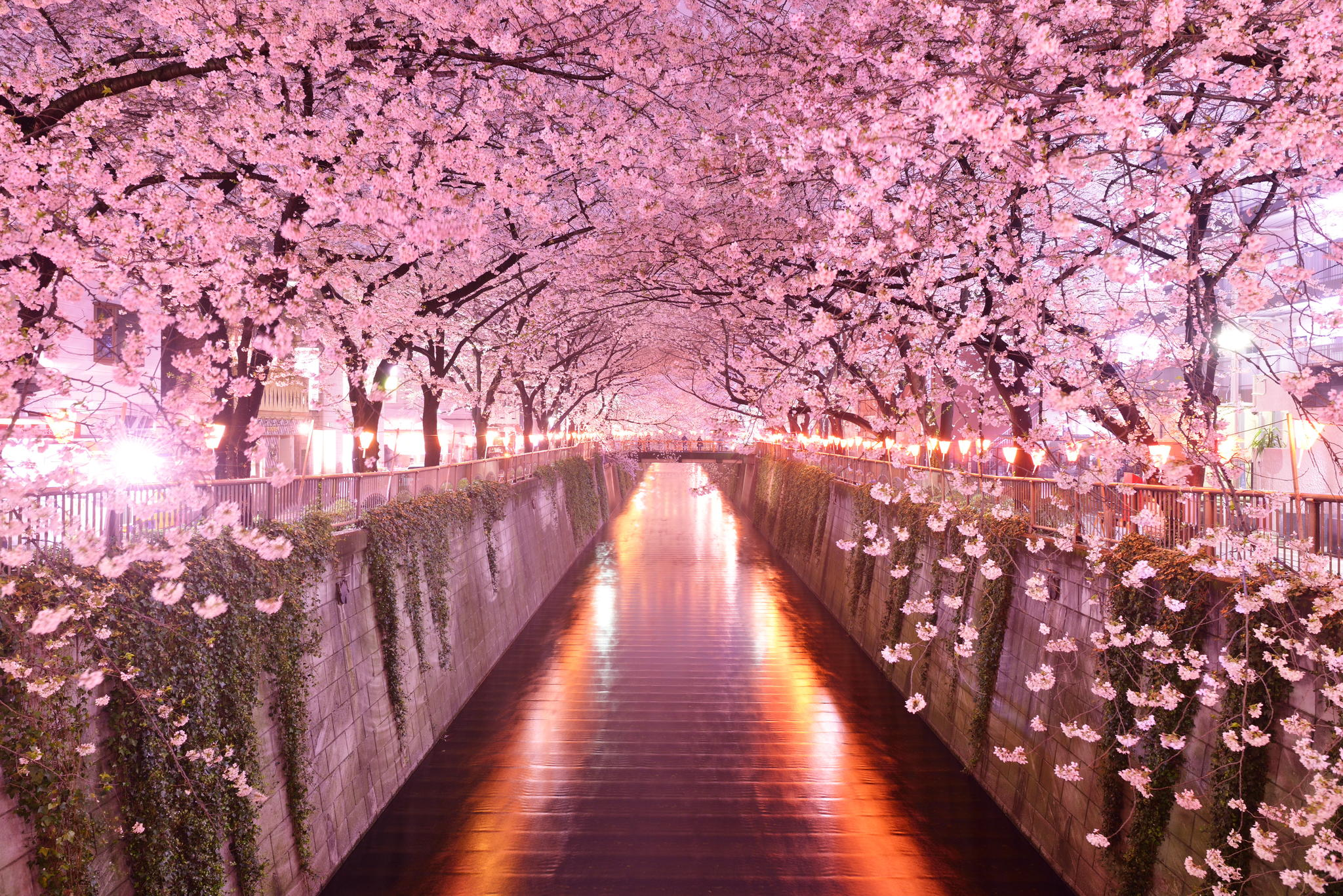 Sakura ALL YOU CAN… Top 10 Spots in Japan!