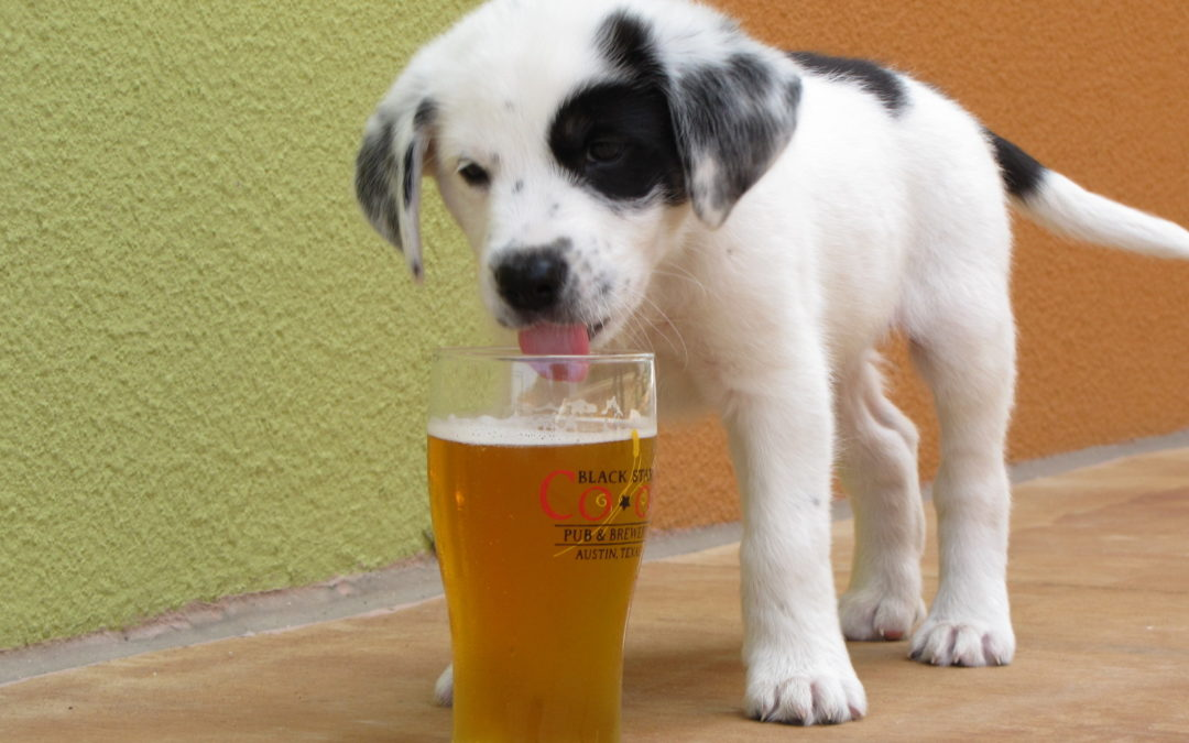 Man's Bestfriend has a new Brew…